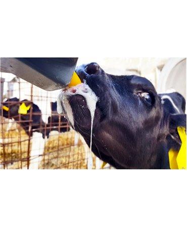 Tetina Milk Bar cu orificiu special, galbena, pentru colostru vitei, productie saliva