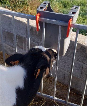 Galeata cu tetina pentru alaptarea viteilor, Milk Bar, 8l, fixata pe grilaj