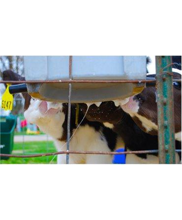 Galeata cu 5 tetine pentru alaptarea viteilor, Milk Bar, 15l productie de saliva