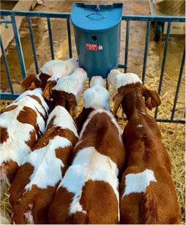 Galeata cu 5 tetine pentru alaptarea viteilor, Milk Bar, 15l pozitie la supt