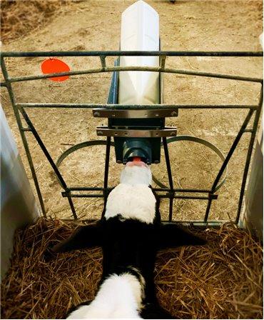 Set 5 kituri complete sistem alaptare vitei Milk Bar Vitality, vedere de sus alaptare vitel