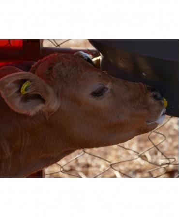 Tetina Milk Bar cu orificiu special, galbena, pentru colostru vitei, incepator