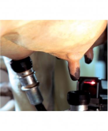 Atasare mansoane in robotul de muls BouMatic