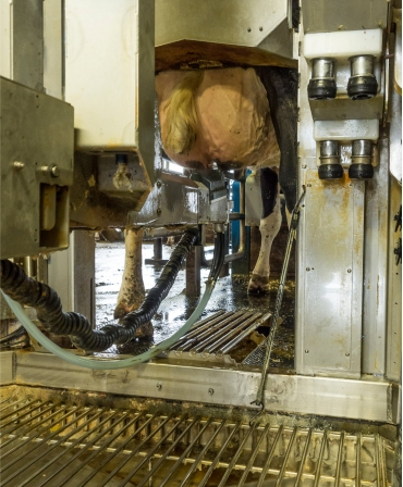 Bratul de muls Robot BouMatic MR-S2