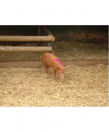 Batoane vopsea temporara pentru marcarea animalelor, speciale pentru perioadele calde , All-Weather Paintstick HC, marcare porc