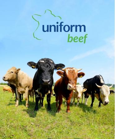 Sistem de management ferme vaci carne