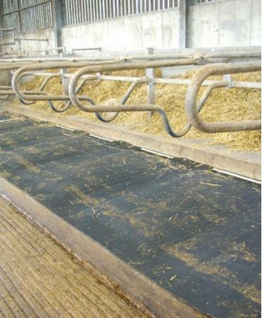 Saltea de odihna pentru vaci, pe pat de apa, PACIFIC, in ferma