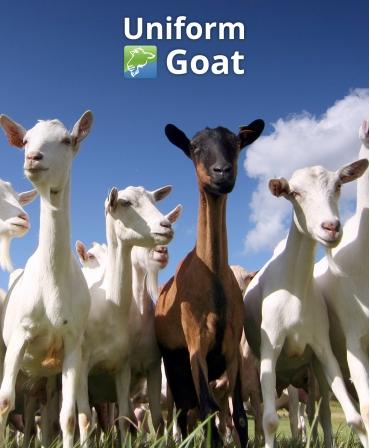 Sistem de management ferme capre Uniform Goat