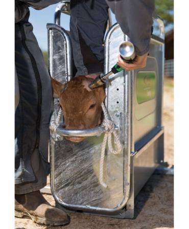 Cusca contentionare vitei fixa Express Farming, cusca in timpul lucrului