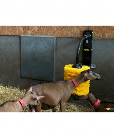 Perie scarpinat animale mecanica, oscilanta, EasySwing Midi, capre in timpul utilizarii