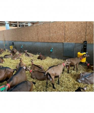 Perie scarpinat animale mecanica, oscilanta, EasySwing Midi, instalata in adapost