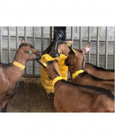 Perie scarpinat animale mecanica, oscilanta, EasySwing Mini, capre aglimerate la scarpinat