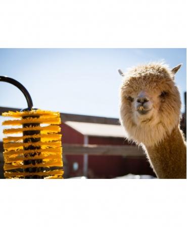 Perie scarpinat animale mecanica, oscilanta, EasySwing Mini, lama