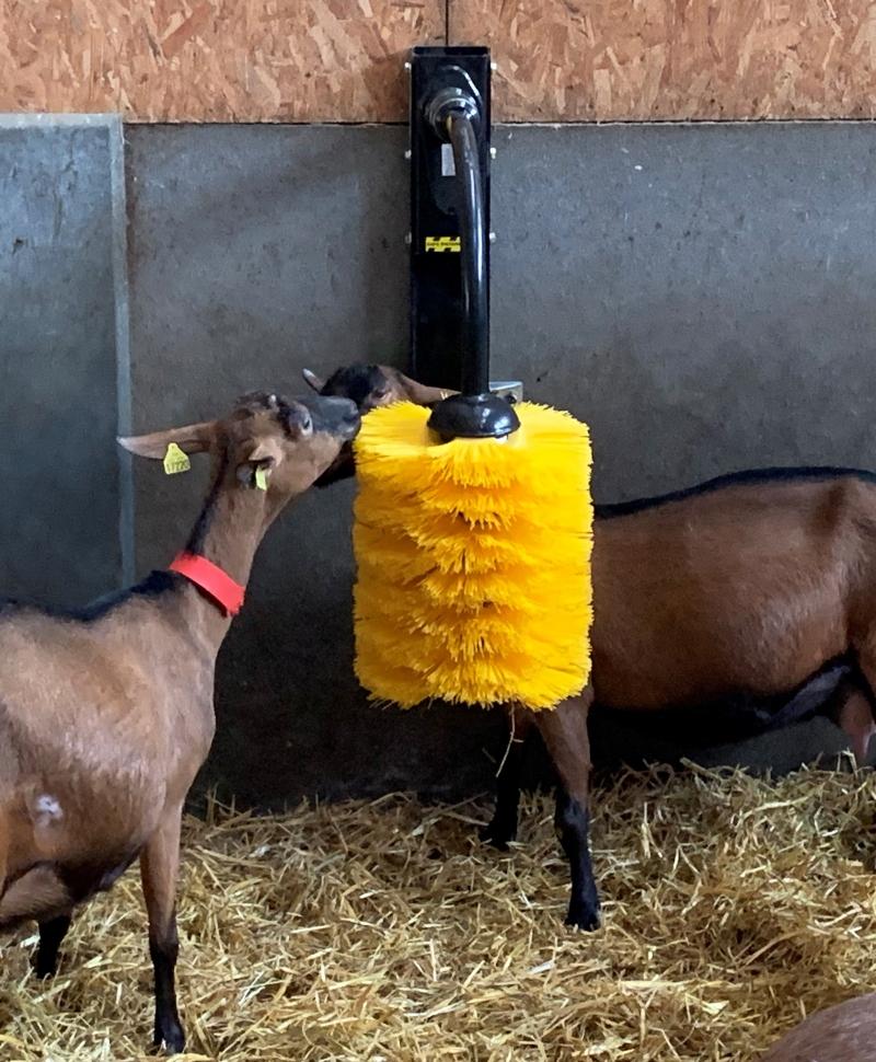 Perie scarpinat animale mecanica, oscilanta, EasySwing Midi, coperta