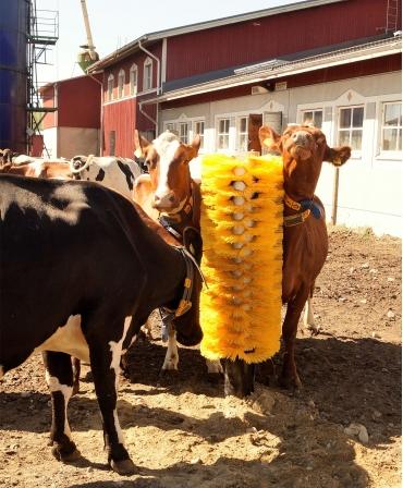 Perie scarpinat animale fixa, EasySwing Totem, vaci