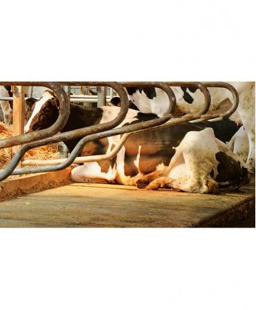 Saltea de odihna pentru vaci, din cauciuc granulat, LOUISIANE, 40mm grosime, 1800mm latime, vaca