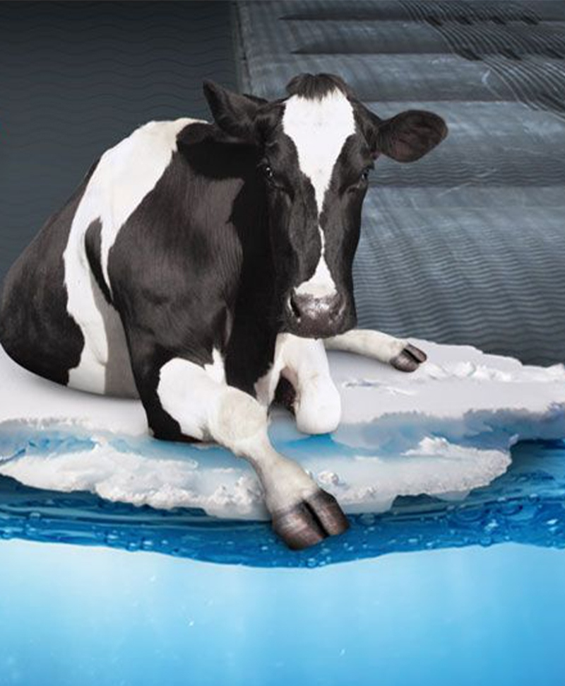 Saltea de odihna pentru vaci, pe pat de apa cu climatizare, AQUACLIM, vaca
