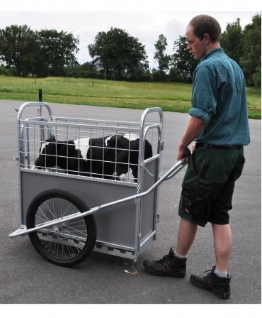 Dispozitiv transport vitei H&L Calf Buggy, in lucru