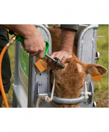 Ecornator cu gaz Express Farming Daos pentru butelie gaz, in timpul ecornarii
